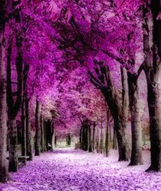 The 2014 PANTONE Color of the Year is Radiant Orchid.Found this color for hair at Sally's in their Ion Neons in Radiant Orchid. Beautiful World, Beautiful Places, Gorgeous Gorgeous, Beautiful Forest, Color Of The Year, Amazing Nature, Belle Photo, Pretty Pictures, Beautiful Landscapes
