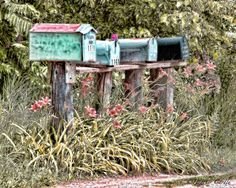 #ChickPicotheDay! (Day 2,065) A #pretty way to get your #mail. #Lillies #Lily #Mailboxes #CountryRoads #GravelRoad #RoadTripping #HappyMonday #BrantfordPhotographer #CanonGirl