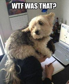 Što s psom koji se boji grmljavine?