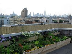 rooftop food production systems