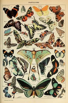 Free Printable Natural History Posters Of Adolphe Millot - Picture Box Blue Illustration Papillon, Butterfly Illustration, Collage Mural, Photo Wall Collage, Picture Collages, Free Collage, History Posters, Nature Posters, History Memes