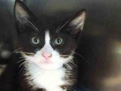 FOSTER CARE 4/11/17 CAME IN WITH MOM AND SIBLINGS - WAS STILL NURSING - HAS SOME DIARRHEA - NEEDS A HOME!