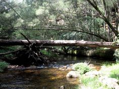 fallen tree in river - Google Search