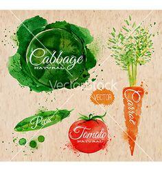 Watercolor vegetables cabbage carrot tomato retro vector by anna42f on VectorStock®