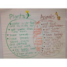 Comparing living things: Plants and Animals Venn Diagram greenbeankinderga...