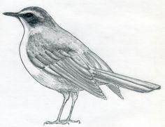 drawing of birds - Google Search