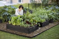 DIY garden beds: 43 interesting ideas for country design Gravel Garden, Garden Stones, Garden Plants Vegetable, Diy Garden Bed, Planting Plan, Flower Garden Design, Bottle Garden, Garden Structures, Plantation