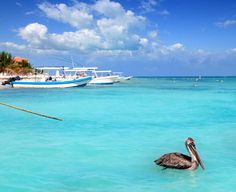 What Makes Puerto Morelos Unique  #puertomorelos #cancun #rivieramaya