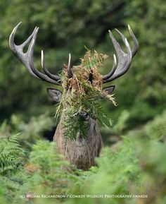 Natural camouflage; other funny animal pics at the link