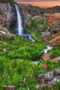 ~~Purfory Basin Falls | wildflowers and waterfall in Ouray, San Juan Mountains, Colorado by Mike DiRenzo~~