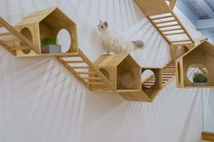 Cat Café TRYST,Playing are on the wall. Image © Qingling Zheng, Shijie Zhang resort in the gardens Cat Wall Shelves, Animal Gato, Cat Playground, Cat Enclosure, Owning A Cat, Cat Cafe, Pet Furniture, Furniture Dolly, Cat Room