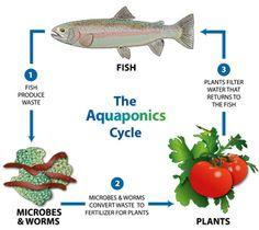C'est quoi l'aquaponie?   www.aquaponie.fr