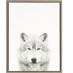 DSOV Sylvie 'Wolf Portrait' by Simon Te Tai Framed Photographic Print on Wrapped Canvas