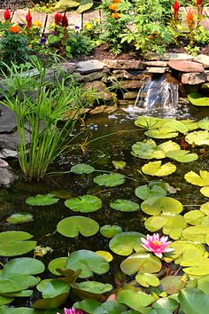 If you look carefully, you can spot a frog toward the lower left corner. This pond is in the yard of Brian and Linda Blyth of Tonawanda, NY.