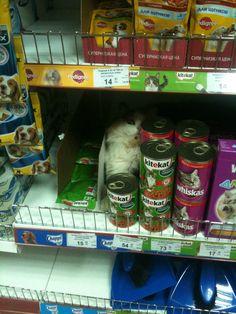 Kitekat, le choix des chats.