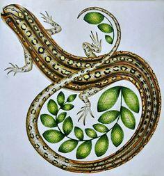 #wildsavannah #milliemarottawildsavannah #animals #lizard #milliemarotta…