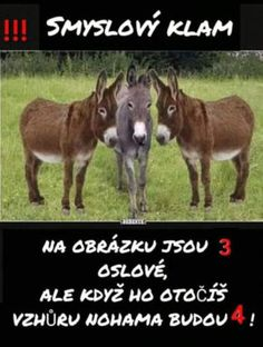 FunGate.cz Lol, Karma, Funny, Animals, Photos, Animales, Animaux, Animal Memes, Animal