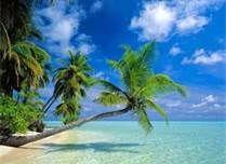Hawaiian beaches - Bing Images