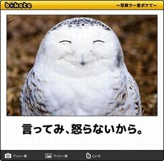 Pretty Animals, Cute Animals, Funny Cute, Photo Art, Haha, Horror, Funny Pictures, Birds, Japanese