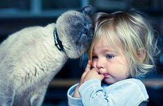 Vivendo a Vida bem Feliz: 23 razões que farão você adotar e amar os gatos!