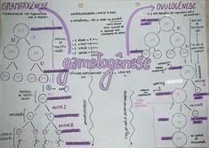 #gametogenese #biologia #resumo