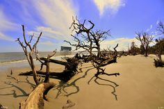 Sand Sun Beach And Little Blue Photograph by Lisa Wooten