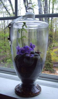 Apothecary jar african violet terrarium. A little of gravel, charcoal, potting soil, and moss. Love it!