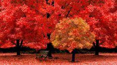 Tree Hd Wallpaper: http://wallpaperlatest.com/wp-content/uploads/tree-hd-wallpaper-latest.jpg