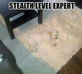 Wheres my dog and whats that bump in the carpet?