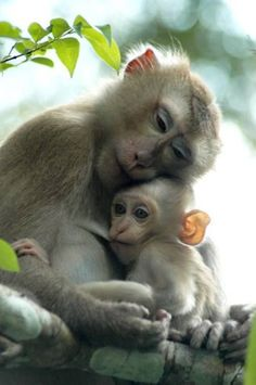 Heart-touching Photos of Mothers and Their Babies - Tiere und Natur - tierbabys Nature Animals, Animals And Pets, Animals And Their Babies, Monkeys Animals, Wild Animals, Strange Animals, Beautiful Creatures, Animals Beautiful, Cute Baby Animals