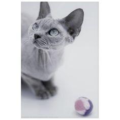Une balle pour chat toute douce en tissu polaire avec de la valériane