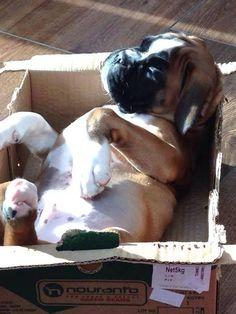 Boxer in a box!