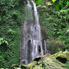 Taman Nasional Gunung Halimun Salak, Bogor - Jabar. Indonesia