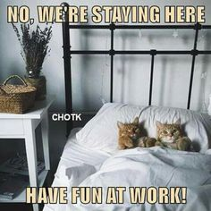 Dis our bed now, hooman! - LOLcats is the best place to find and submit funny cat memes and other silly cat materials to share with the world. We find the funny cats that make you LOL so that you don't have to. Cute Cat Memes, Funny Animal Memes, Funny Animal Pictures, Cute Funny Animals, Animal Funnies, Silly Cats, Cats And Kittens, Funny Cats, Crazy Cat Lady