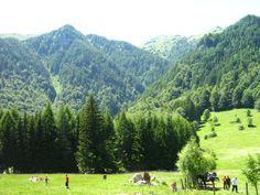 Natural reservation - poiana stanii