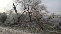 Elbwiesen im ersten Weiß