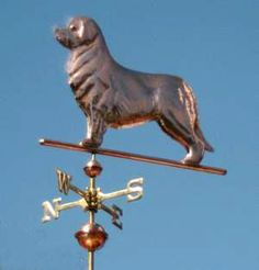 Newfoundland Dog Weathervane Standing by West Coast Weather Vanes.  This copper Newfoundland Dog weathervane features glass eyes, gold leafed patterns and distinctive tooling which gives the fur a realistic texture on the body.   Customers can provide photographs of their special canine pets for a customized  weather vane depicting  their favorite dog.