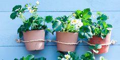 Zin om zaadjes te planten, in de aarde te wroeten en planten te verpotten? Geef toe aan de lentekriebels met deze leuke ideeën om je inner hovenier aan het werk te zetten, ook als je geen groene vingers hebt. Of geen tuin of plantenbak. Deze drie dingen heb je vast al in huis en helpen…