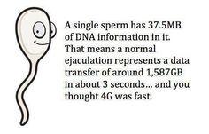 A SINGLE SPERM