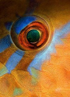 Fish eye By Нарчук Андрей