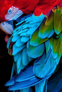A parrot in the rain forest of Brazil.