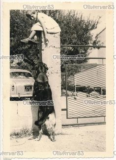 Little Girl on Top of Gate Column and Dog Vintage Unusual Photo | eBay