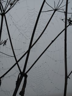 autumn, fall, herbst, spinnennetz, spiderweb Autumn Fall, Utility Pole, Pictures, Spider Webs
