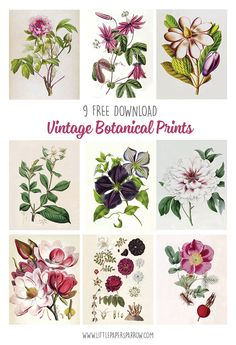 "Beautiful vintage botanical illustrations of magnolias, roses, clematis, peonies, and gardenias."" width=""660"" height=""965"" /> Beautiful vintage botanical illustrations of magnolias, roses, clematis, peonies, and gardenias"