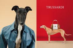 Los galgos fashionistas de William Wegman para Trussardi   SrPerro.com, la guía para animales urbanos.