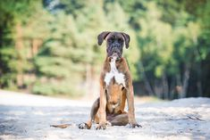 honden , dog , dogs , photography , puppy's , Nikon , fotografie , 70-200 MM lens , Kimberly Duchateau Photography , hondjes , hondenfotografie , Dog-photography , Dog pictures , Dog fotoidee's , Dog photography ideas , Dog photography owner , Professional dog photography , honden fotograaf , hondenfotografie houdingen , Dog photography poses , creative , green , pink , flowerbackground , studio , studio photography dogs, pink , summer , spring , zomer , roze , groen , lente…