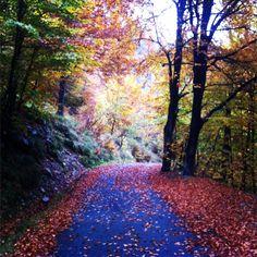 Nordic Walking lungo il Sangone alla scoperta dei colori autunnali – Val Sangone (TO)