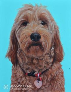 Susie - Groodle Dog Painting - paintmypet by Deborah Cullen Sweet Soul, Dog Paintings, Dog Portraits, Goldendoodle, My Animal, Perth, Play, Canvas, Dogs