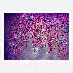Nature Photography, purple, fuschia, tree branches, bokeh, Blossom fantasy fine art photography print 8x10 on Etsy, $28.00