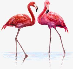 Two flamingos PNG and Clipart Flamingo Png, Pink Flamingos, Flamingo Rosa, Flamingo Vector, Flamingo Gifts, Clipart, Mandala Art, Stock Background, Illustration